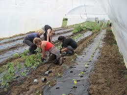 Žene rade u plasteniku. Fotografija preuzeta od plezirmagazin.net