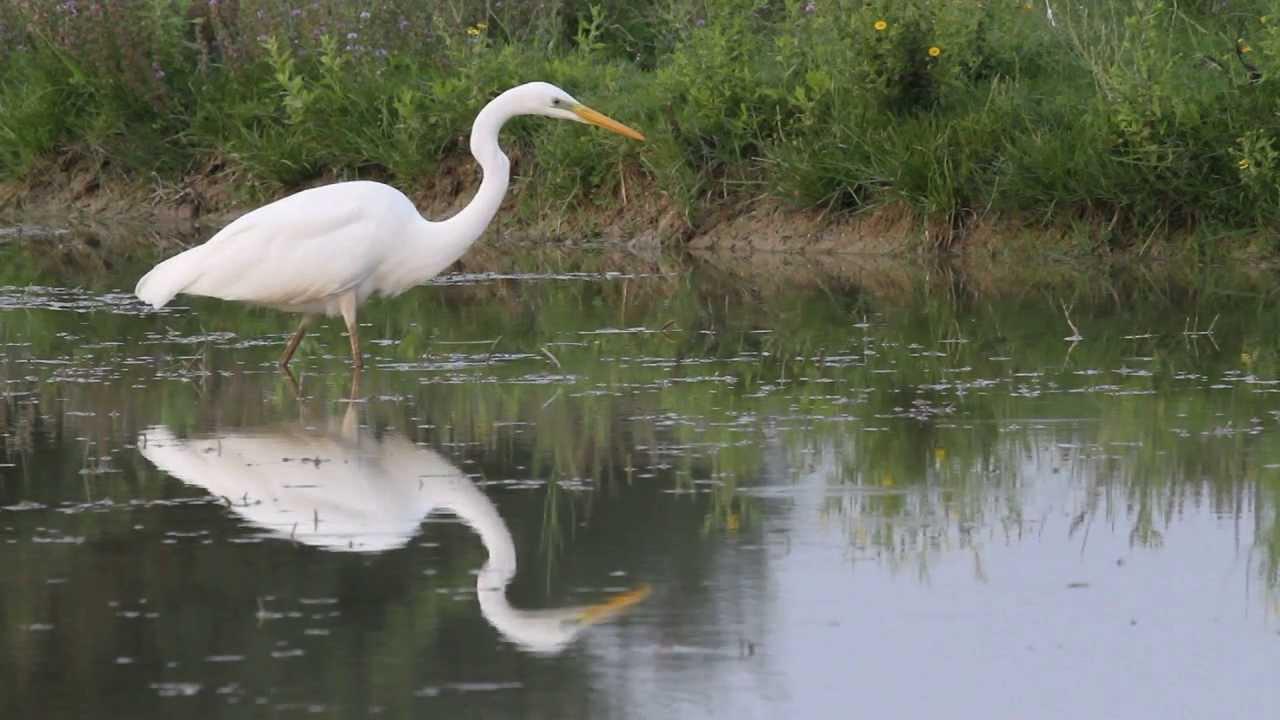 Na Ludašu izbrojano je 260 parova ove predivne ptice.