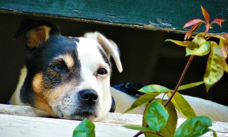 Zlostavljanje životinja spada u krivična dela. Fotografija preuzeta sa sajta: pravnazastitazivotinja.com