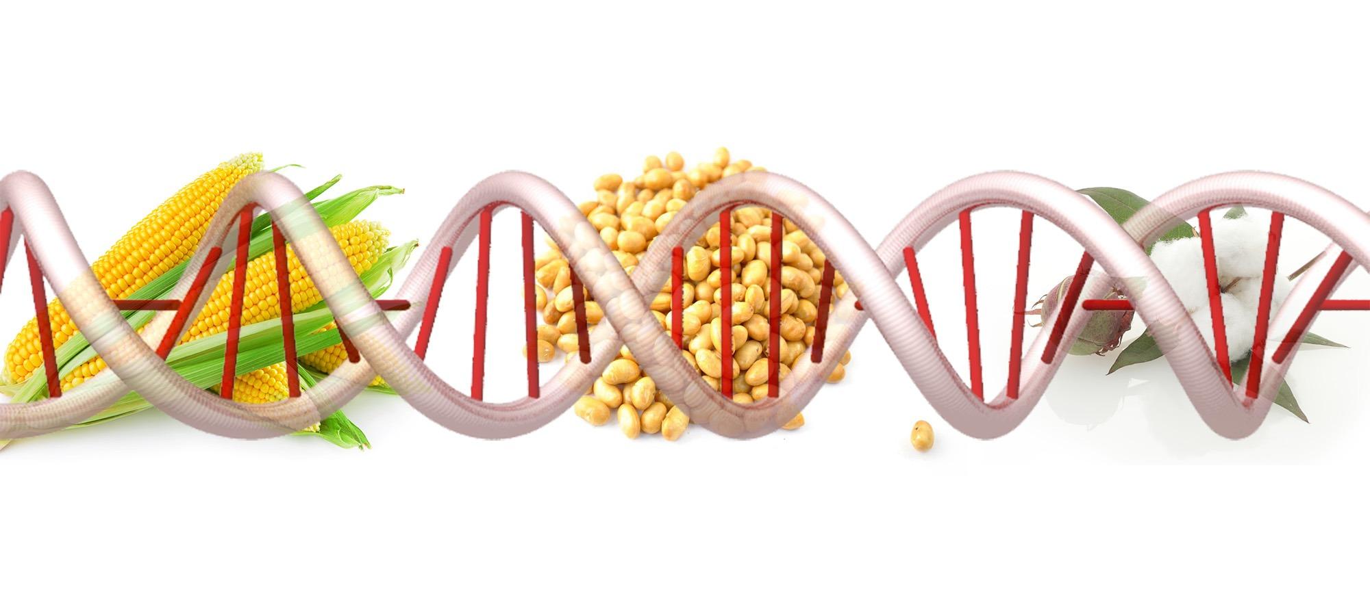https://www.emaze.com/@AIZFIFZI/GMOs