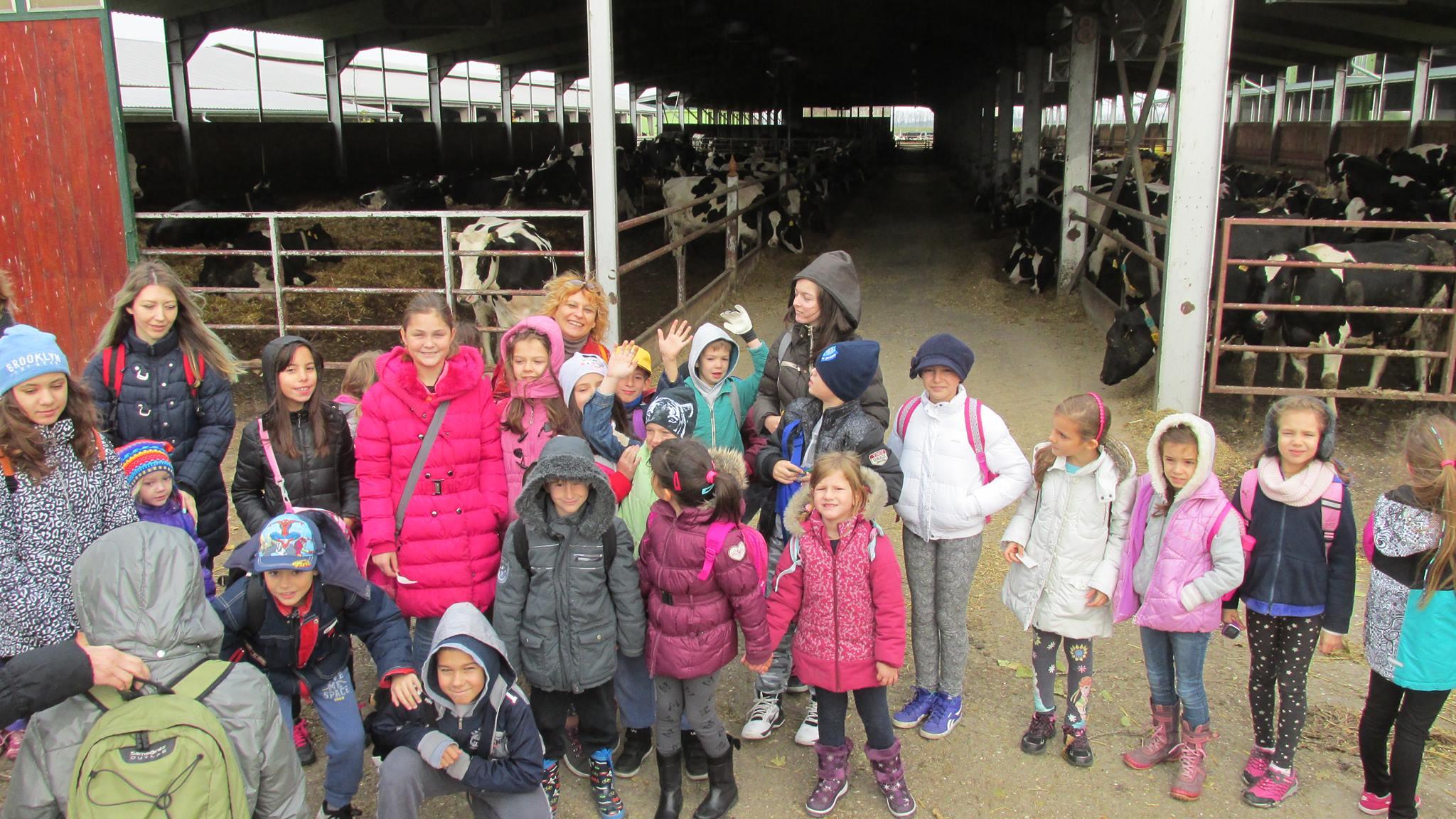 Deca su mogla da vide kako danas funkcioniše jedna savremena farma krava