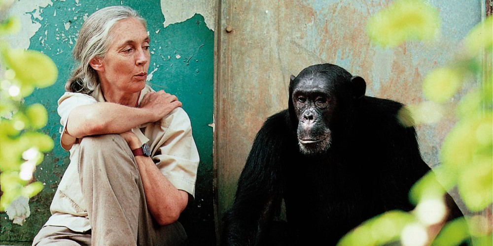 Izvor-facebook-stranica-The-Jane-Goodall-Institute